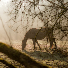 The Horse by Matteo Caldaroni - Animals Horses ( nikon 85mm f1.8g, fog, nikon d610, horse, landscape, , renewal, green, trees, forests, nature, natural, scenic, relaxing, meditation, the mood factory, mood, emotions, jade, revive, inspirational, earthly )