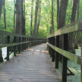 Pathways  by Katherine Coker - Landscapes Forests ( lighting, green, trees, bridge, swamp )