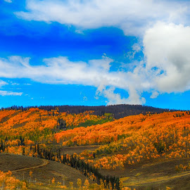 Autumn in the Rockies by Penny McWhirt - Landscapes Mountains & Hills ( mountains and hills, autumn, fall, colorado, aspens, rocky mountain national park, landscapes )