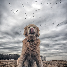 by James Betts - Animals - Dogs Portraits