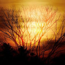 sunset by Rajib Kumar Bhattacharya - Landscapes Sunsets & Sunrises