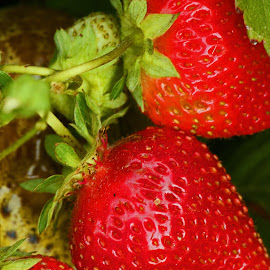 Fresh Strawberries by Jeannine Jones - Food & Drink Fruits & Vegetables
