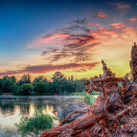 new beginnings  by Peter Schoeman - Landscapes Sunsets & Sunrises