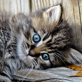 When he was a baby by Ashley Jill - Animals - Cats Kittens ( baby, young, animal )