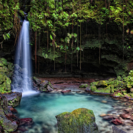 Emerald Pool, Dominica by Derek Galon - Landscapes Waterscapes