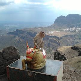 CUTEST MONKEY by Sandip Bagul - Animals Other ( temple, hills, monkey )