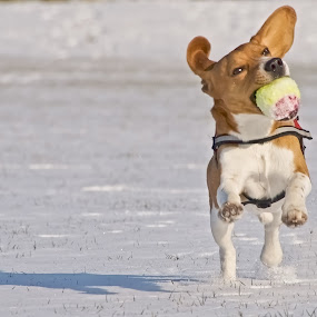 Doggy Bubblegum by Mick Brinkmann - Animals - Dogs Portraits