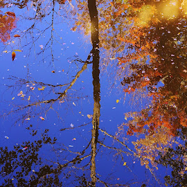 Reflections on the water by On the Lake Photography - Nature Up Close Trees & Bushes ( reflection, fall colors, park, tree, fall )