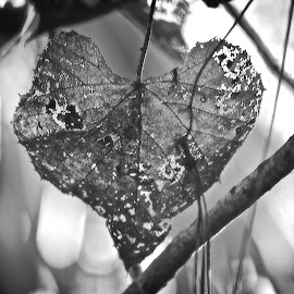 broken heart  by Silvia Mininni - Nature Up Close Leaves & Grasses (  )