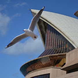 Opera House by Bevin Pavithran - Novices Only Wildlife