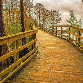 Bridge at Greenfield Park by Carol Plummer - City,  Street & Park  City Parks (  )
