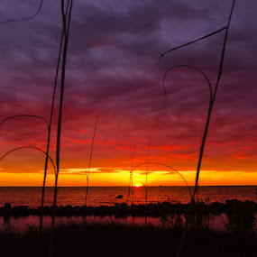 Red Sunset by RomanDA Photography - Landscapes Sunsets & Sunrises ( breeze, 2014, sunset, gulf, long exp, spring )