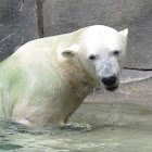 Polar Bears iSlider puzzles icon