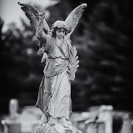 by Walter Farnham - Buildings & Architecture Statues & Monuments ( angel, mamie, verticle, bw, gravestone,  )
