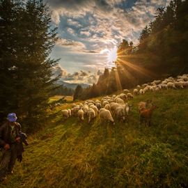 Patient shepherd by Stanislav Horacek - Landscapes Prairies, Meadows & Fields
