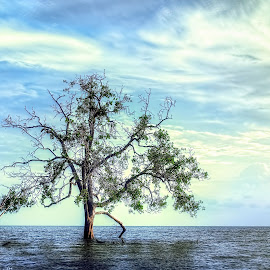 tree by Dak Debab Photoholic - Landscapes Beaches ( beaches, tree, landscapes )