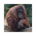 Dublin Zoo Visitor App icon