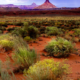 Color in the Desert by Candee Watson - Landscapes Deserts ( clouds, orange, sand, mountains, red, grass, weather, yellow, flowers )