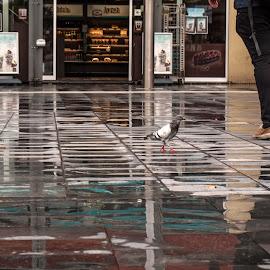 Lunch by Radijsje VC - City,  Street & Park  Street Scenes ( pigeon, urban, reflection, color, street scene, lunch )