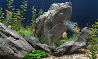 Screenshot of Aquarium Wallpapers