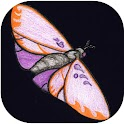 Flutterby icon
