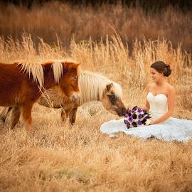 curiosity by Jody Johnson - Wedding Bride ( horses, outdoors, photorad, bride, rustic )