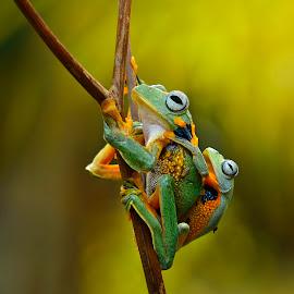 My pose by Ais Setiawan - Animals Amphibians