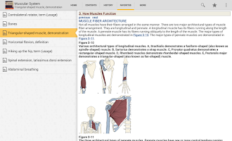 Screenshot of The Muscular System Manual