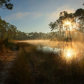 Fog in the Pinelands by Troy Wheatley - Landscapes Forests ( water, fog, path, sunrise, morning, pine, shadows, mist, nature, landscape )