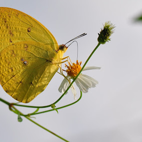 by Syarief Wiranegara - Animals Insects & Spiders