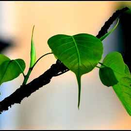 New Generation  by Tapesh Mukherjee - Nature Up Close Leaves & Grasses