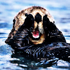 Sea Otter Sound Effects icon