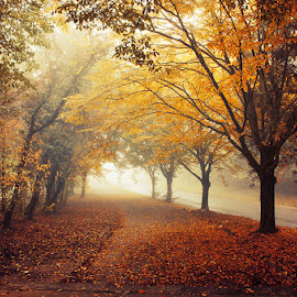 by Zsolt Zsigmond - Landscapes Forests ( autumn, colors, fall, path, trees, leaves, walk,  )