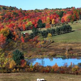 Horses and Autumn Leaves by Jane Spencer - Landscapes Prairies, Meadows & Fields ( farm, horses, autumn, landscape, pond )