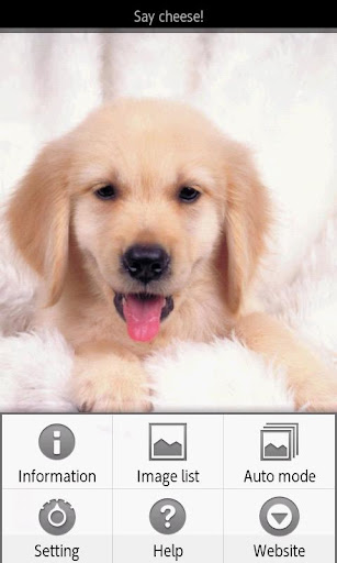 ipiks Love dogs 2 Lite