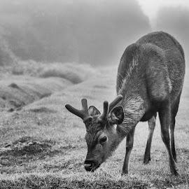 The Friend who I met at the Hortain Plains by Buddhika Jayawaredana - Animals Other ( nature, black and white, white, beauty, sri lanka, black, animal,  )