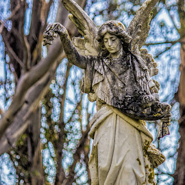angle statue by Vibeke Friis - Buildings & Architecture Statues & Monuments ( cemetery, angels,  )