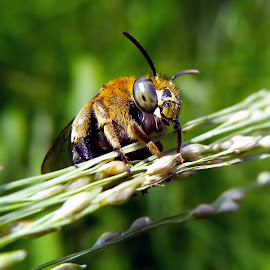 green stripes bee by Hendrata Yoga Surya - Instagram & Mobile Android