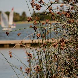 Behind the Bush by Nimit Rastogi - City,  Street & Park  Amusement Parks ( boating, bushes, sailing, boats, lake )