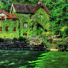 EVER GREEN by Guilherme  Junior - Buildings & Architecture Other Exteriors ( park, nature, buildings, plants,  )