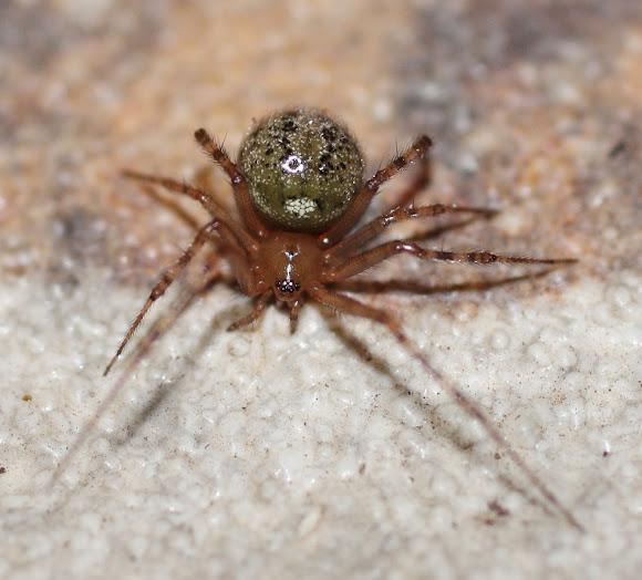House button spider