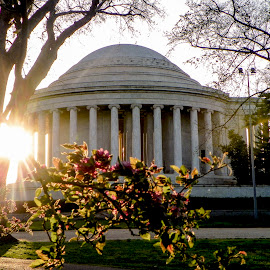 Jefferson Memorial by Patricia Rich - Buildings & Architecture Statues & Monuments ( starburst, memorial, sunset, sundown, jefferson, cherry blossoms )