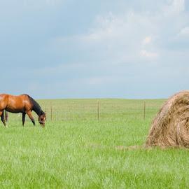 Random shot! by Ann Spurling - Animals Horses