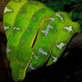 by Jeff Fox - Animals Reptiles