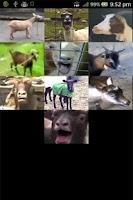Screenshot of Screaming Goats SoundBoard