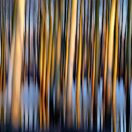 poplar grove at sunset by Claudio Minghi - Abstract Patterns ( abstract, water, tree, color, sunset )