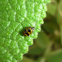 Tiny Leaf Beetle