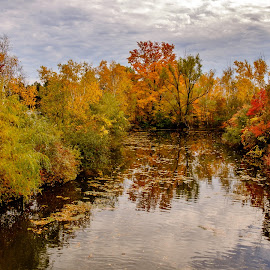 Reflections of a great day by Jack Brittain - Landscapes Waterscapes ( water, scarborough, colour, reflection, canada, zoo, autumn, toronto, ontario, leaves )