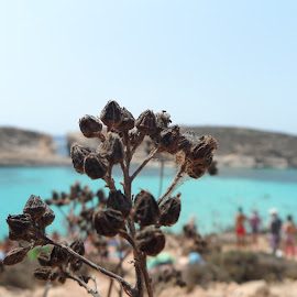 Near the beach by Luke Bezzina - Nature Up Close Other plants ( common, blue lagoon, brown, beach, people )