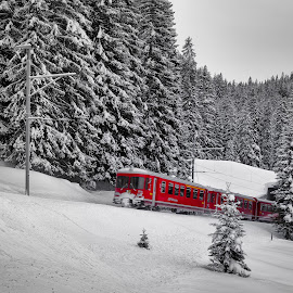 by Falk Tschirschnitz - Transportation Trains ( winter, davos, klosters, snow, switzerland, train, graubünden, alps )